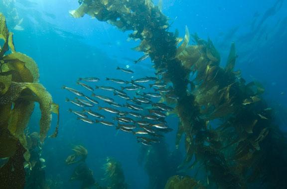 البحر العملاق